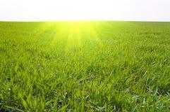 Herbe et soleil Photo stock