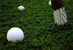 Herbe et sphères image stock