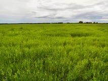 Herbe et tress nuageux Image stock