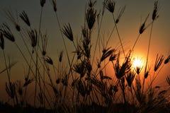 Herbe fantastique et coucher du soleil de paysage Photos stock