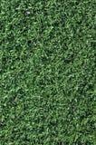 Herbe fausse utilisée sur des zones de sports Photos stock