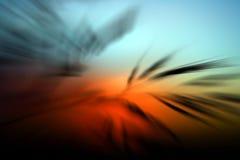 Herbe foncée et coucher du soleil orange Photo stock