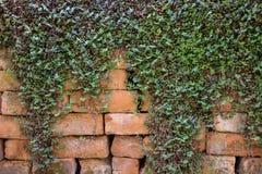 Herbe, fond de feuilles Images libres de droits