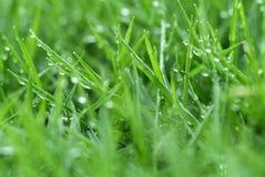 Herbe fraîche Photographie stock libre de droits