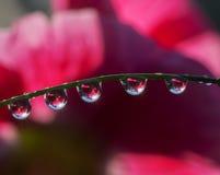 Herbe fraîche avec des baisses de rosée et des faisceaux de Sun image libre de droits