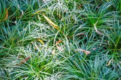 Herbe fraîche verte Photographie stock libre de droits