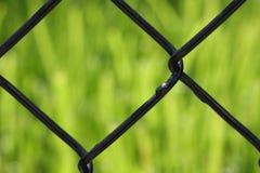 Herbe, frontière de sécurité Photo stock