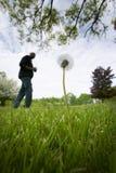 Herbe géante dans la pelouse Image stock