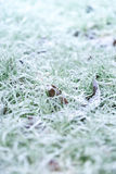 Herbe givrée de matin Photo libre de droits