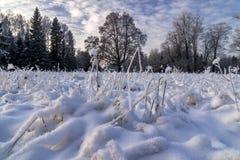 Herbe givrée par Hoar Photo stock