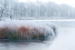 Herbe givrée sur un lac de forêt Images stock