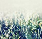 Herbe glaciale Image stock
