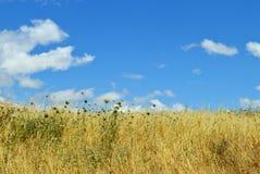 Herbe grande et ciel nuageux Photographie stock