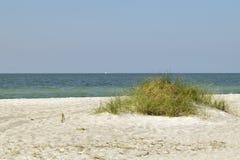 Herbe grande sur une dune de sable Photographie stock libre de droits