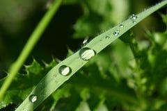 Herbe humide avec le moustique photographie stock