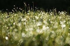 Herbe humide le matin Photo libre de droits