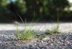 Herbe intense s'élevant de l'asphalte Photographie stock