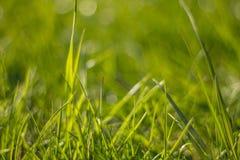 Herbe juteuse et vert clair Fin vers le haut Fond d'herbe verte La texture de l'herbe photo stock