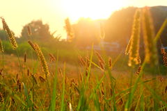 Herbe le matin image stock