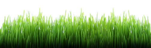 herbe longtemps Images stock