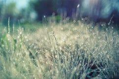Herbe lumineuse d'été de lumière du soleil avec des baisses de rosée Orientation molle photos stock