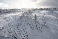 Herbe montrant juste au-dessus de la neige profonde Photo stock
