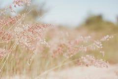 Herbe natale rouge (fond abstrait peu profond) Images libres de droits