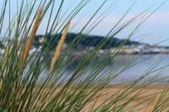 Herbe naturelle de mer Photo stock