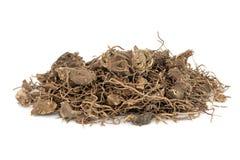 Herbe noire de racine de Cohosh photographie stock