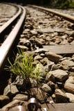 Herbe nouveau-née sur le chemin de fer Photo libre de droits