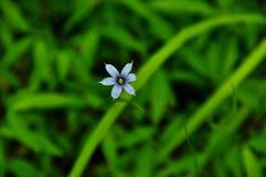 Herbe observée par bleu Photos libres de droits
