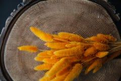 herbe orange de queue de lapin (lapin), bouquet sec de fleur de lagurus sur W Images libres de droits