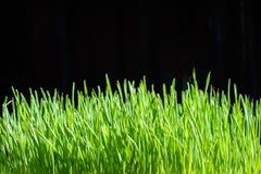Herbe organique Photos stock