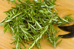 Herbe organique de romarin de jardin frais Images stock