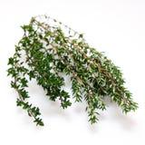 Herbe organique fraîche de thym d'isolement Photo libre de droits