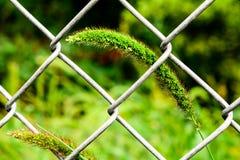 Herbe par la barrière Photographie stock
