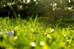 Herbe par la lumière du soleil photographie stock libre de droits
