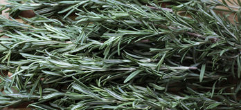 Herbe parfumée romarin Photos libres de droits