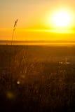 Herbe pendant le matin Sun Photos libres de droits