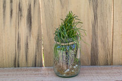 Herbe poussée dans un pot en verre Images stock