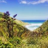 Herbe près de mer Photographie stock libre de droits