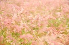 Herbe rose Photos libres de droits
