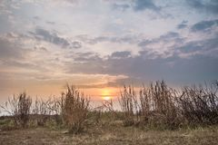 Herbe roussie dans le coucher du soleil Image libre de droits