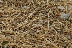 Herbe sèche Photos stock