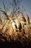 Herbe sèche Photographie stock libre de droits