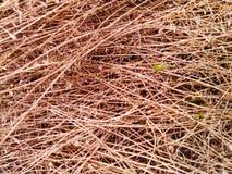 Herbe sèche Image libre de droits