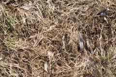 Herbe sèche après les fontes de neige Image stock