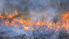 Herbe sèche, arbres, buissons, et meules de foin brûlants avec de la fumée caustique Le feu dans le mouvement lent de forêt banque de vidéos