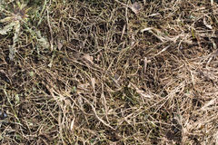 Herbe sèche au ressort Images stock