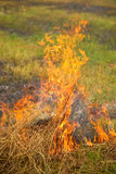 Herbe sèche brûlante Photo stock